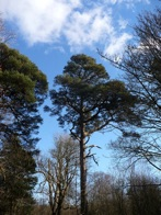 Bridgend woods are great for walking. Mature Scots pine but also redwoods, beech and elm, untouched by beetles.